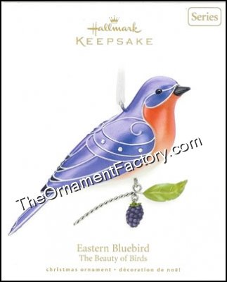 2010 Eastern Bluebird, Beauty of Birds